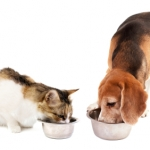 Pet Food Questions: #2 What Ingredients Do I Look For in My Pet's Food?